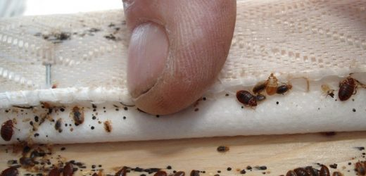 Professional Bed bug Exterminators Might Take Proper proper care of Your Problem Rapidly