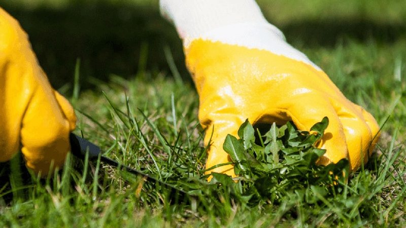 Hard Surface Weed Control: Get Rid of Unsightly Growth
