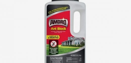 Finding the Best Ant Repellent for My Home